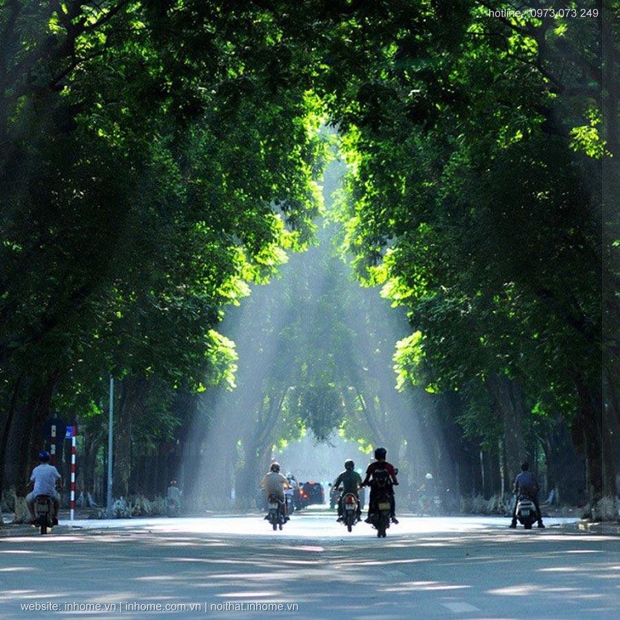 Nếu chặt hơn 1300 cây trên Phạm Văn Đồng, Hà Nội đi ngược xu hướng thiết kế cảnh quan đô thị bền vững